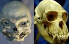 «Страдающая фигней» Маша, Дарвин и необычный иск