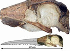 Немецкие палеонтологи нашли уникальную вещь. Фото