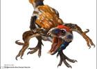 Ученые откопали самую древнюю птицу. Фото