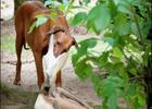 В Германии безбашеный пеликан чуть не сожрал пса. Фото