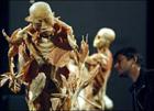 В Марселе показывали мертвых китайцев, которые «пожертвовали тела ради науки». Фото