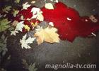 В Киеве на улице нашли окровавленное тело. Фото