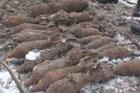 Опасную находку сделали археологи на Киевщине. Фото