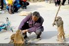 Китайского дрессировщика избили палкой… три обиженных обезьяны. Забавные фото