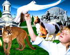 Сыну мэра Николаева выделили более 10 тысяч квадратных метров в зоопарке