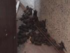 Буковина. Женщина очень удивилась, обнаружив в своей квартире «вампиров». Фото