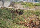 В Швейцарии мужчина упал в вольер к медведям. Бедолага чудом выжил. Фото