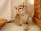 Подаренный Ющенко котенок попал в клинику