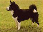 Черновецкий решил показать всем, как он любит собак
