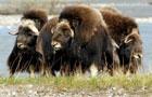 Список животных, которым грозит вымирание. Фото