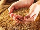 Экспорт зерна в Украине пошел на спад /участник рынка/
