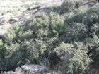 Обнаружено древнейшее растение на Земле. Фото