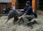 В немецком зоопарке появилось на свет животное, которое не рождалось здесь целых 60 лет. Фото