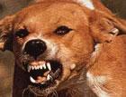 В Киеве стая бездомных собак загрызла человека