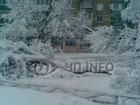 В Борисполе снег и шквальный ветер валит на землю деревья и рвет провода. Фото