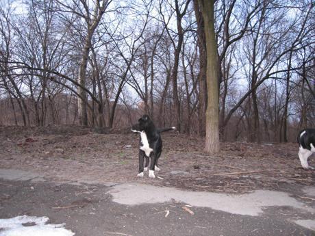 В Запорожье живодеры заживо сожгли щенка!!!!!!!!!!!!!!!!!!!!! Zveri2_250310