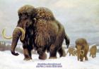 На Черниговщине нашли бивень мамонта. И еще кое-что древнее