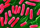Ученые нашли под океаном самых жаростойких бактерий