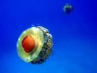 Ученым удалось размножить живую «яичницу». Фото