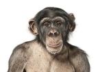 Невообразимые портреты животных. Фото