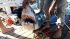 Нападение акул на туристов в Египте. Фото