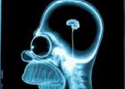 От вегетарианской диеты усыхает мозг