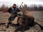 Суровый шведский охотник одним выстрелом подстрелил лося и лыжника