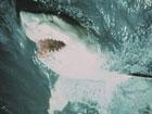 Опытные дайверы оказались не по зубам египетским акулам-людоедам