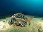 Лучшие подводные фотографии уходящего года