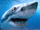 Пьяному – море по колено. Нажравшийся турист убил акулу