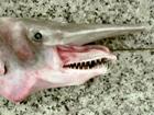 У берегов Севастополя в  рыбацкие сети попался тихоокеанский глубоководный монстр. Фото