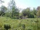 Янукович запретил рубить деревья в Киеве