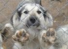 Бесчеловечность. В Одессе закрывают приют для животных: якобы ради борьбы с… наркоманией