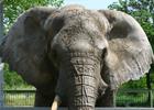 Депутаты хотят купить слона для столичного зоопарка. Дальше их «хотения» дело не пошло