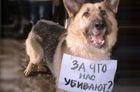 Кабмин приказал резать животных без наркоза, или Размышления о запрете кетамина в Украине
