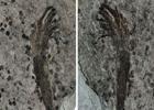 На территории Китая нашли самое древнее в мире растение. Фото