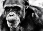 Американец решил создать свою «Планету обезьян». Фото
