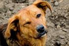 Чиновников просят забыть о Евро-2012 и хоть полгода отдохнуть от убийств бездомных животных