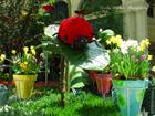 О таком ботаническом саде Киев может только мечтать. Фото