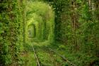 Чего только не придумает природа. На Ровенщине есть настоящий «тоннель любви».  Фото