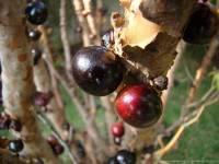 В Аргентине даже яблоки особенные. На  наших огородах такое вырастить невозможно. Фото