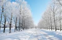 Синоптики обещают на редкость теплую зиму. Как же мы без 30-ти градусного мороза?