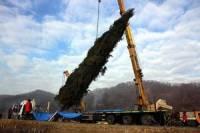 Украинская елка за 100 тыс. евро упакована и готова ехать к Папе Римскому. Фото