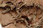 Наконец-то весь мир узнал причину необычной позы мертвых динозавров. Правда, ученые и сами не могут толком объяснить это