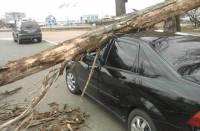 На Киев обрушился ураган: побитые машины, летающие крыши и сломанные деревья