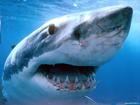 Сгорая от любопытства, биологи выяснили механику плавания акул. Оказывается, все дело в двойных вихрях