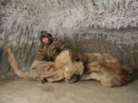 Сенсация от ученых. В Якутии найден мамонт без костей. Фото