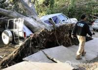Мощный ураган намял американцам бока. В «Городе ангелов» ветер вырывал с корнями столетние деревья. Фото