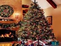 Ученые предупреждают: остерегайтесь «синдрома новогодней елки»