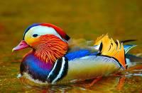 Чего только не бывает в жизни. Самые яркие птицы на планете. Фото
